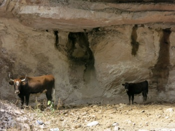 Cave dwellers in the Canyon