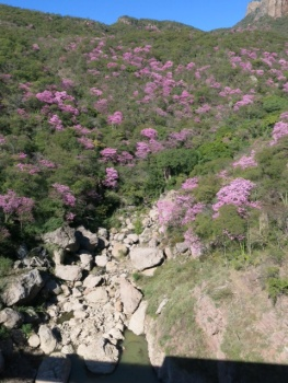 Pink flowers on the railway route