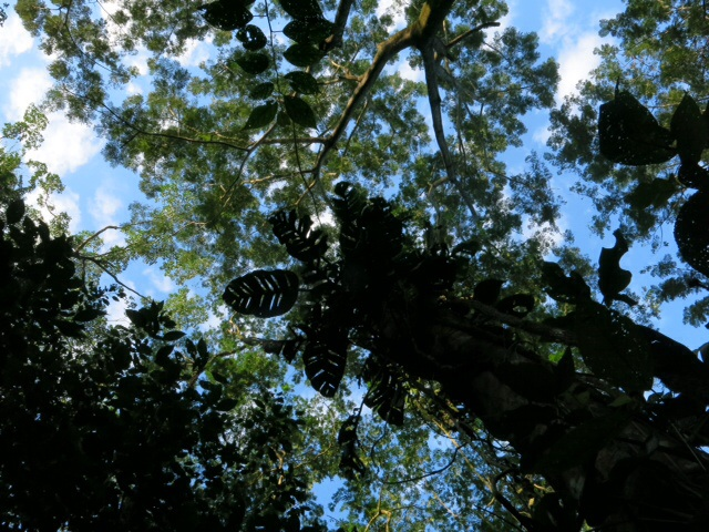 Jungle canopy