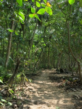 Path through the trees in Manzanillo