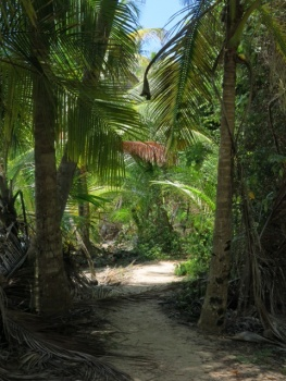 Path to Starfish beach