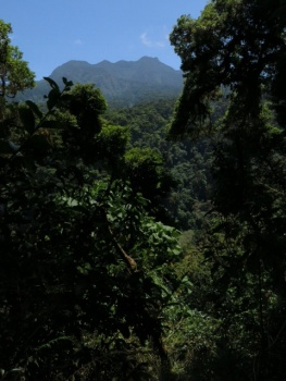 View point along the Quetzal track