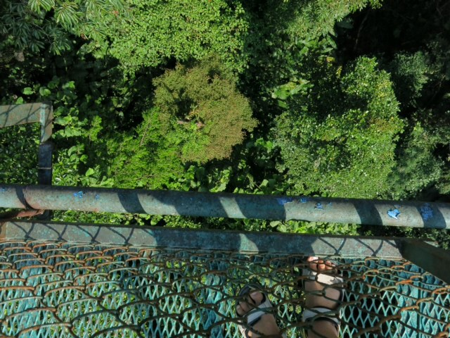 Looking down from the bridge