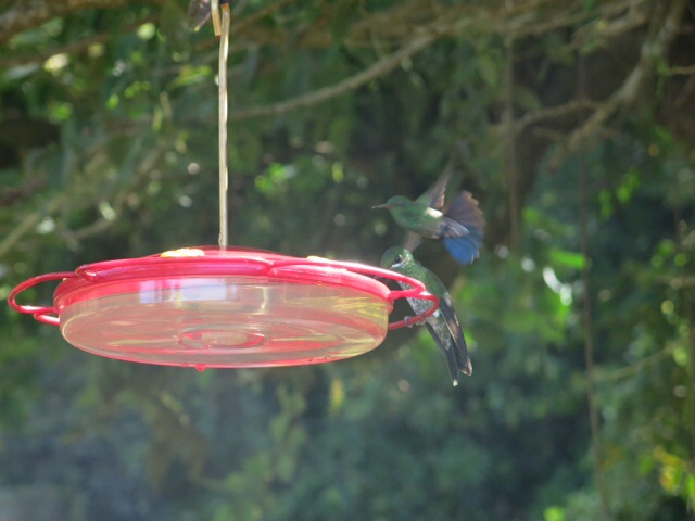 Humming birds at the feeder