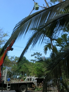 Tree chopping Cost Rica style