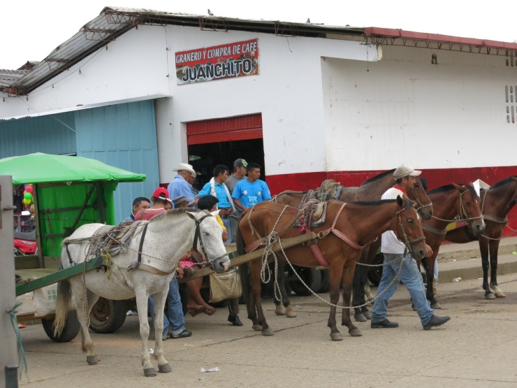 Horse transport at the market in San Agustin