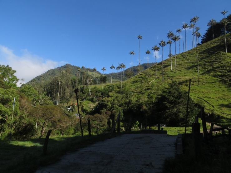 Start of the Cocora walk