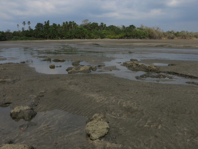 The river at low tide