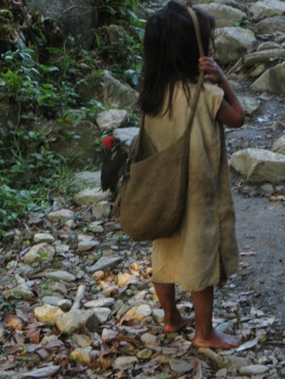 Kogui girl with bird in her bag