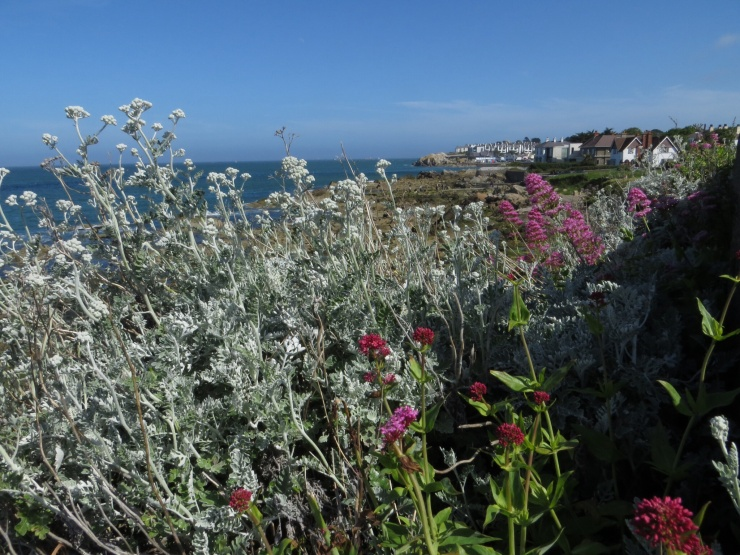 Flowers along the cliff top
