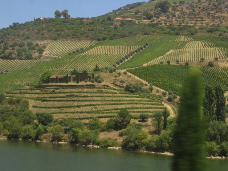 View of the vineyards from the train