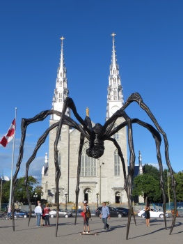 Notre Dame and a spider
