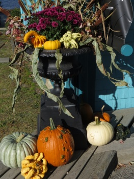 Display of pumpkins