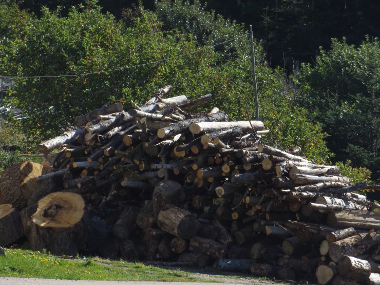 Serious woodpile ready for the winter