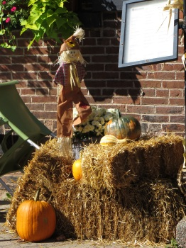 Many houses and business have pumpkin and scarecrow displays