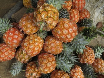 Pile of pineapples