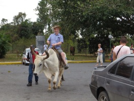 Enterprising Cuban offering cow rides in the car park!