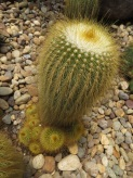A very prickly cactus