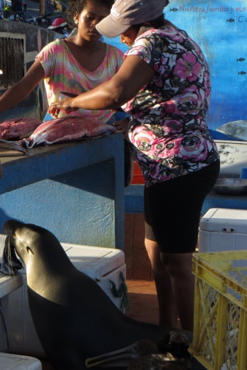 Begging sea lion at the fish market