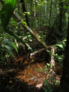 A swampy area in the jungle