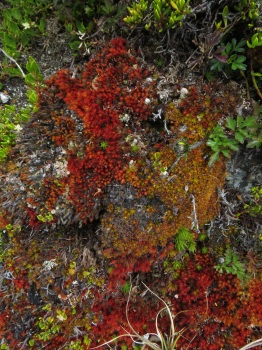 There were lots of different coloured mosses on the rocks