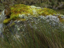 Lots of colours in the moss in Cajas