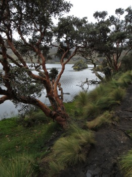 By the lake in Cajas National Park