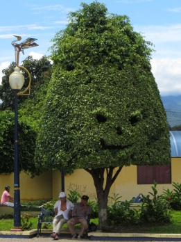 Interesting topiary in Macara