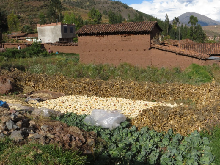 Corn drying in Tipon