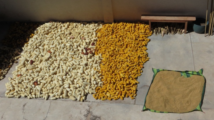 Corn and quinoa drying on the patio