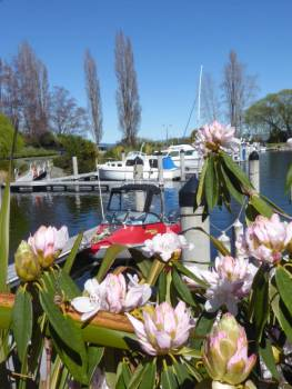 Rhododendrons at Kinloch marina