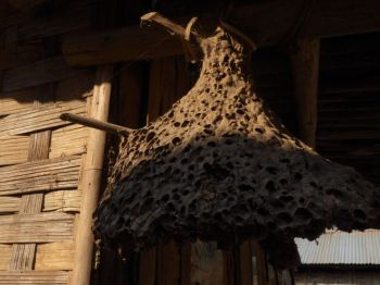 Old wasps nest is lucky!