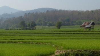 View over the rice fields