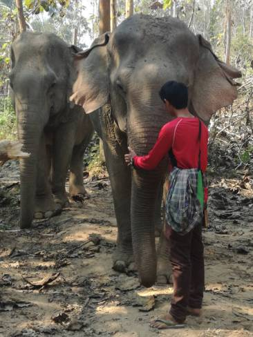 With their mahout