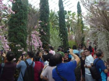 Cherry blossom, people and selfies