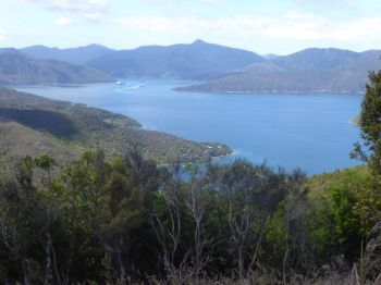 Queen Charlotte Sound from Te Mahia Saddle